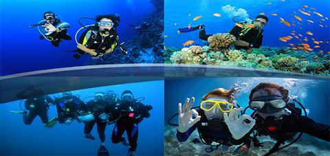 diving_zadnata_